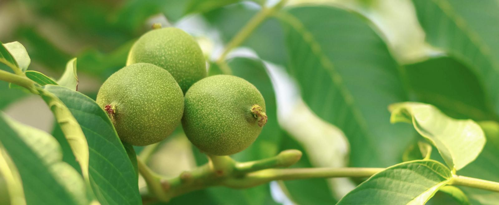 Quipasur y Fertiglobal: La alianza que promete ser protagonista del mercado de nutrición vegetal chileno