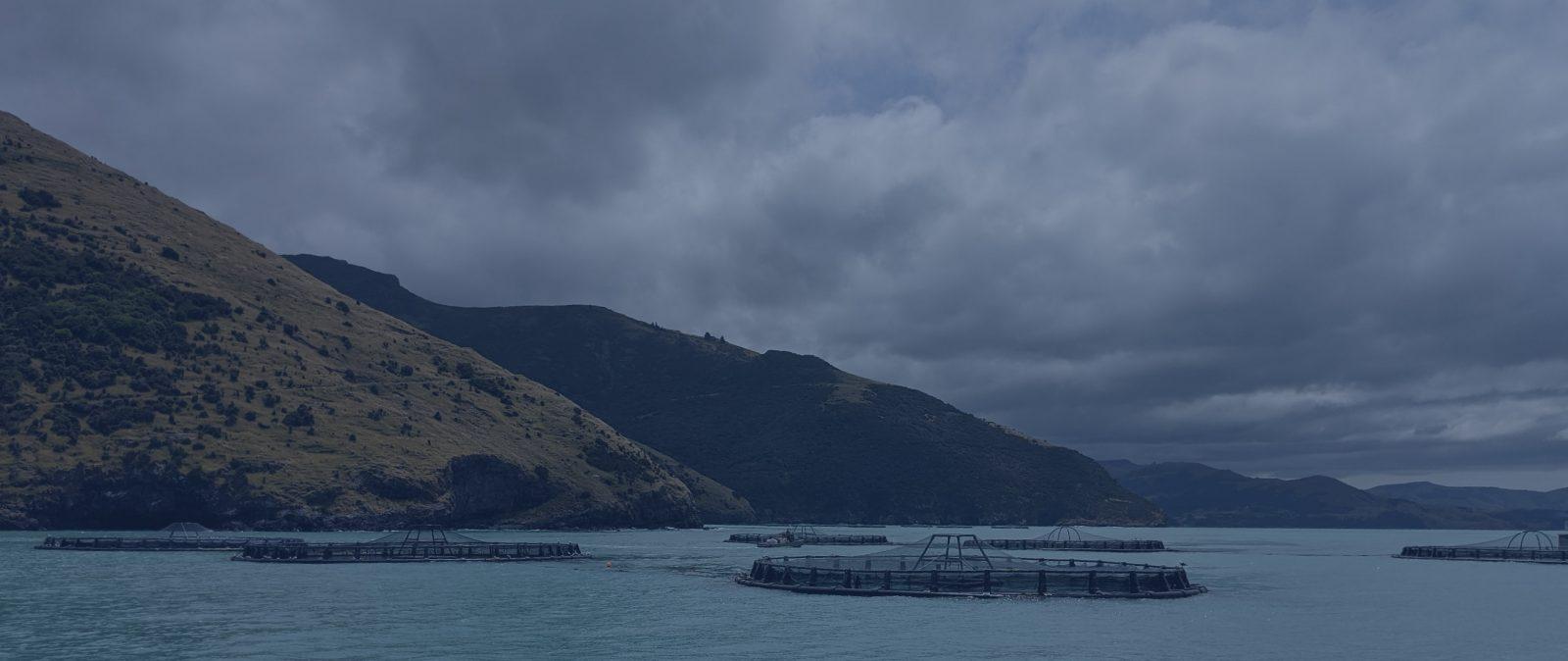 Quipasur potencia su división de salmonicultura con nueva oficina en Chiloé