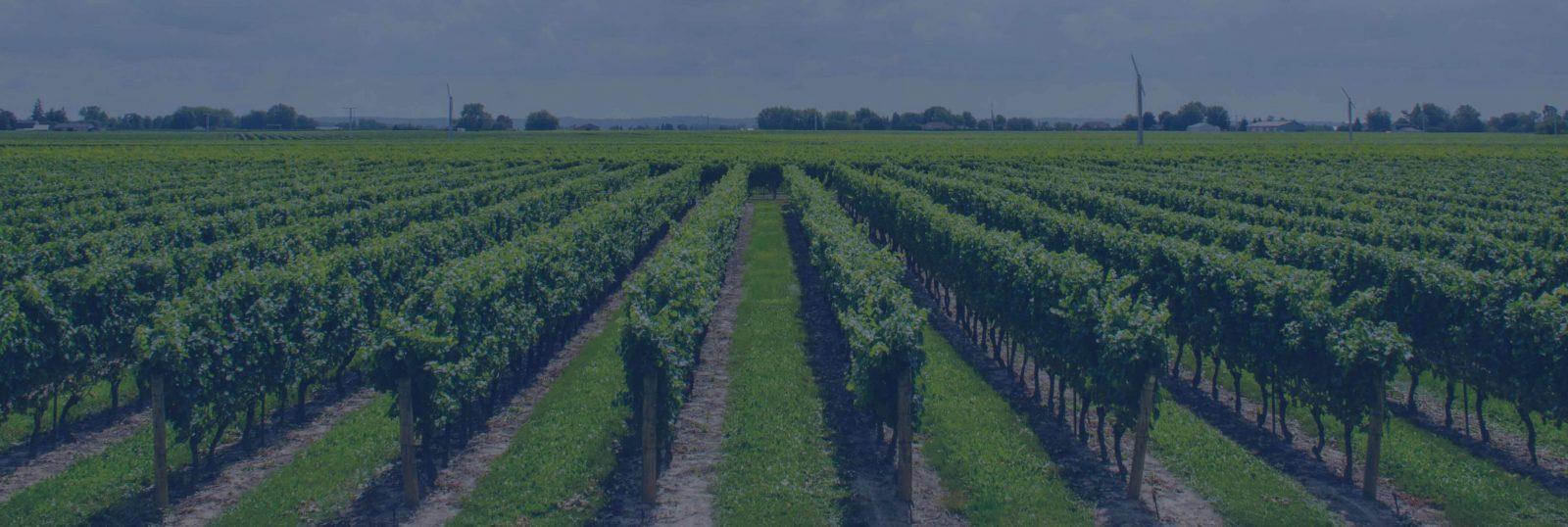 Fertilizantes líquidos de calidad certificada, formulados para cada suelo: Dosificación exacta y máxima producción